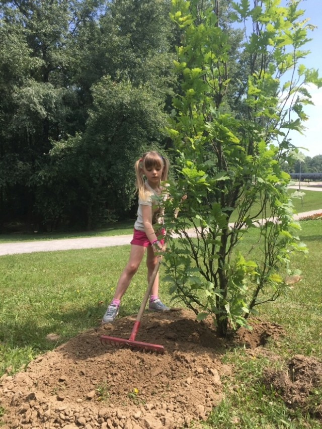 Vida Milanja posadila drvo na bundeku