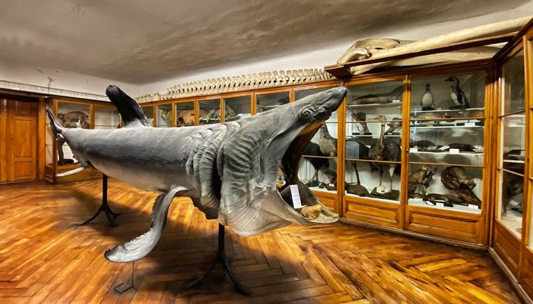 Hrvatski prirodoslovni muzej