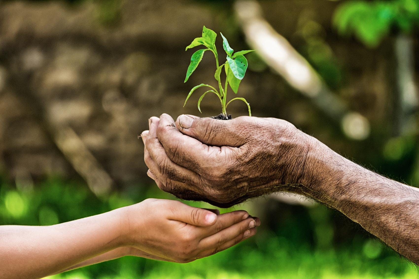 Julius Meinl povodom Međunarodnog dana kave zasadit će 12 000 stabala!